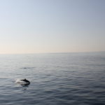 Miércoles Mudo: Delfines en Long Beach