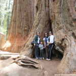 Camping en el Sequoia National Park