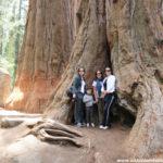 Miércoles Mudo: Sequoia National Park