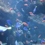 Moompetam Festival en el Acuario del Pacífico (Sorteo – finalizado)