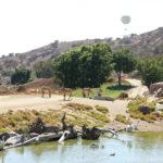 Miércoles Mudo: ¿Africa? No, California