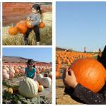 Quinto año en el pumpkin patch
