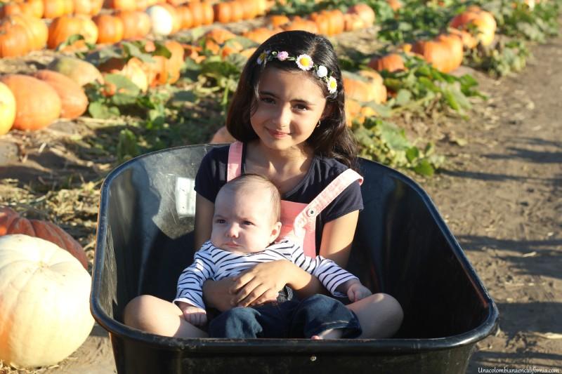 Pumpkin patch UCEC