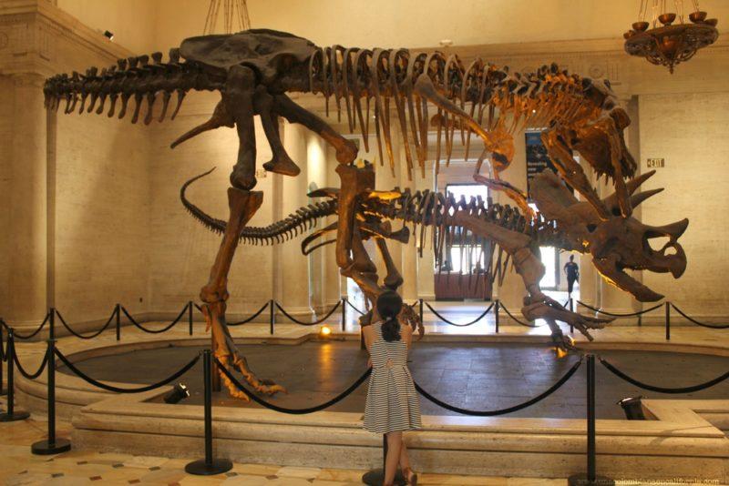 ninos-en-los-angeles-museo-historia-natural
