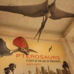 Conociendo a los pterosaurios en el Museo de Historia Natural