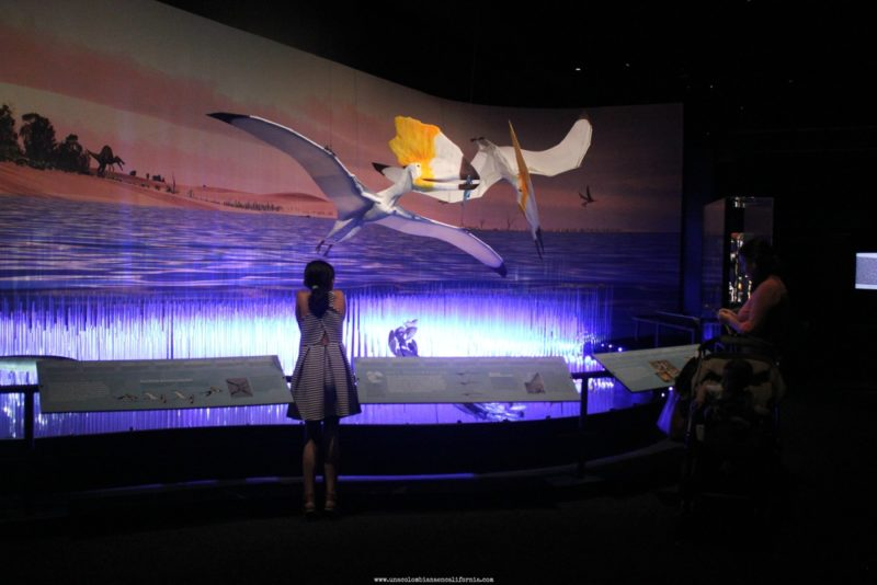 pterosaurios-en-el-museo-de-historia natural los angeles