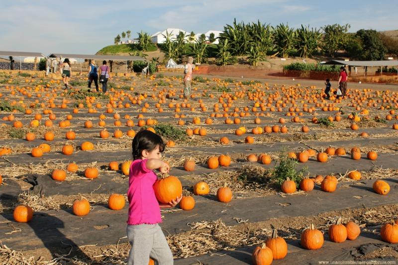 pumpkin-patch-2013-blog