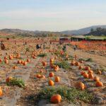 """Cultivos de calabaza en LA y alrededores: """"Pumpkin Patches"""""""