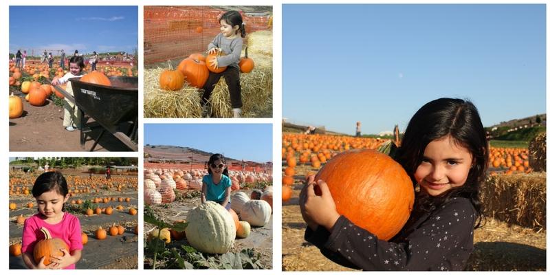 pumpkin-patch-5-anos