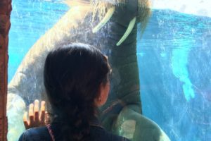 Un día de diversión en Seaworld San Diego