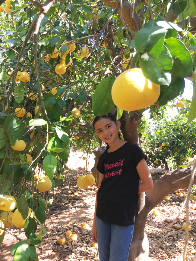 California Citrus State Historic Park en Riverside
