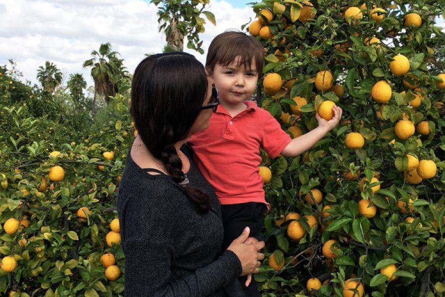 California Citrus State Historic Park en Riverside